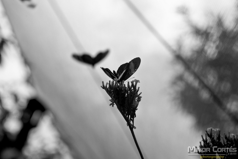 Butterfly living in a black and white world