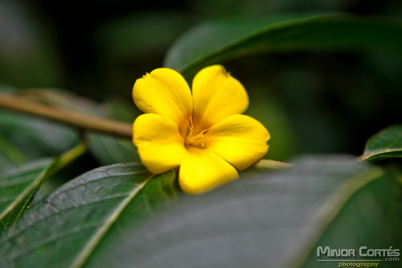 Baby Yellow Flower
